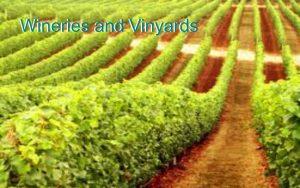 Wineries & Vinyards