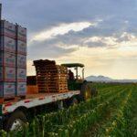 Farm Labor Contractors