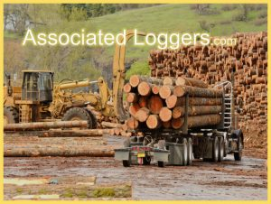 Logging, Timber Ops & Foresters