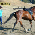 Horse Trainers & Breeders